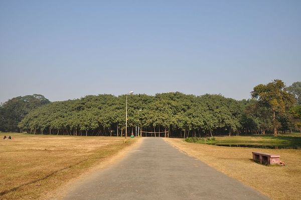 The great banyan tree 1