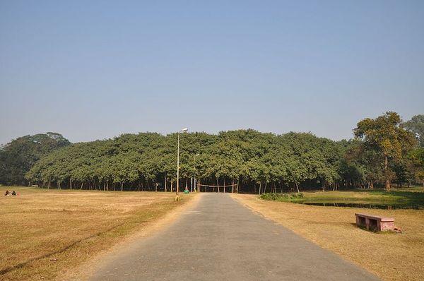 The great banyan tree 1