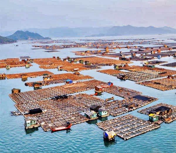 Tanka Comunity, People, China, Hindi, History, Story, Ithias, Information, Jankari. Kahani, Floating Boat,