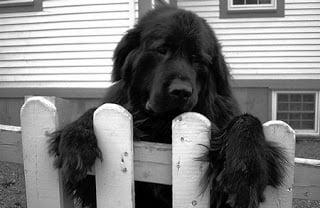 Dog Suicide, Hindi, Amazing, Weird, Adbhut, News, Story, History, Kahani, itihaas, Rahasya, Animal Suicide