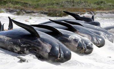 Blue Whale Suicide,Hindi, Amazing, Weird, Adbhut, News, Story, History, Kahani, itihaas, Rahasya, Animal Suicide