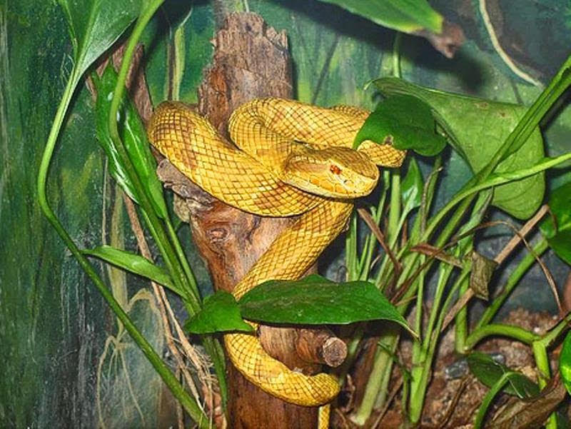 Snake Island, Brazil , Hindi, History, Story, Kahani, Itihas, Information, Janakari, Dangerous,
