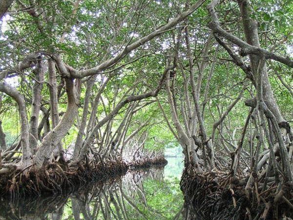 Ramree Island, Hindi, History, Story, Information, Itihas, Janakari , Khanai, Dangerous, Deadly, Khatarnak,