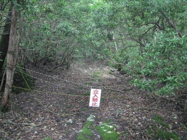 Aokigahara - Japan, Hindi, History, Story, Information, Itihas, Janakari , Khanai, Dangerous, Deadly, Khatarnak,
