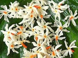 Parijaat Flower