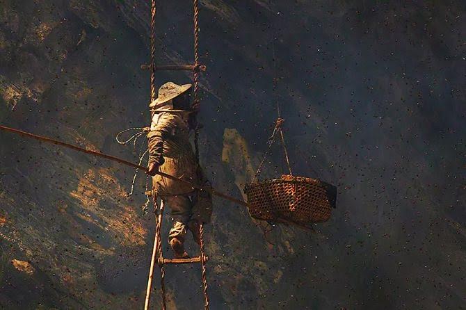 Gurung Man collecting honey