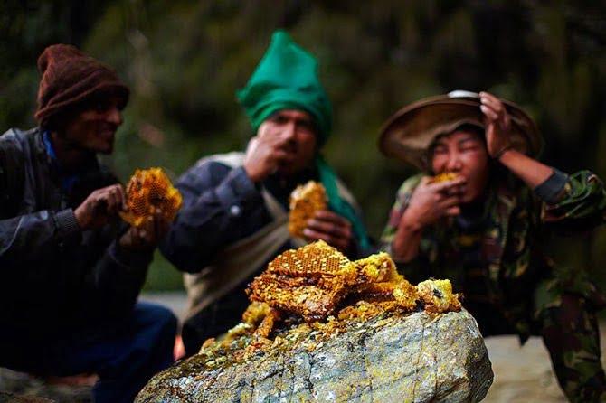 Gurung People eating bee hives