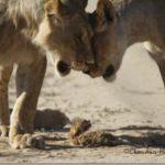 बिल्ली के बच्चें कि साहस भरी कहानी, तस्वीरों कि जुबानी