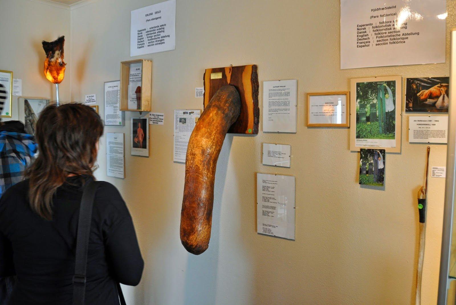 Large Elephant's Penis