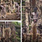 लैंड डाइविंग – वनातू आइलैंड – एक खतरनाक परम्परा जिसमे 100 फ़ीट ऊंचे लकड़ी के टावर से लगाते है छलांग