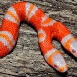 Myths & Facts of Snakes : सांपो से जुड़े 10 भ्रम और अंधविश्वास