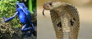 Amazing Facts of Snakes in Hindi :