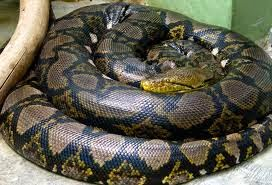 Amazing Facts of Snakes in Hindi