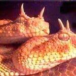 20 Hindi Facts of Snakes : सांपो से जुड़े 20 फैक्ट्स