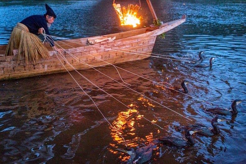 Cormorant Fishing or Ukai History, Story , Information in Hindi