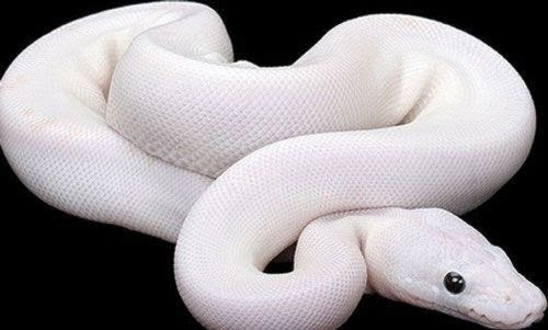 Shakun Shastra - Shakun Apshakun for Snake (Naga) in Hindi