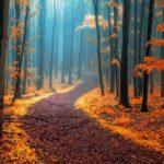 धरती पर मौजूद 20 खुबसूरत, अलौकिक रास्ते