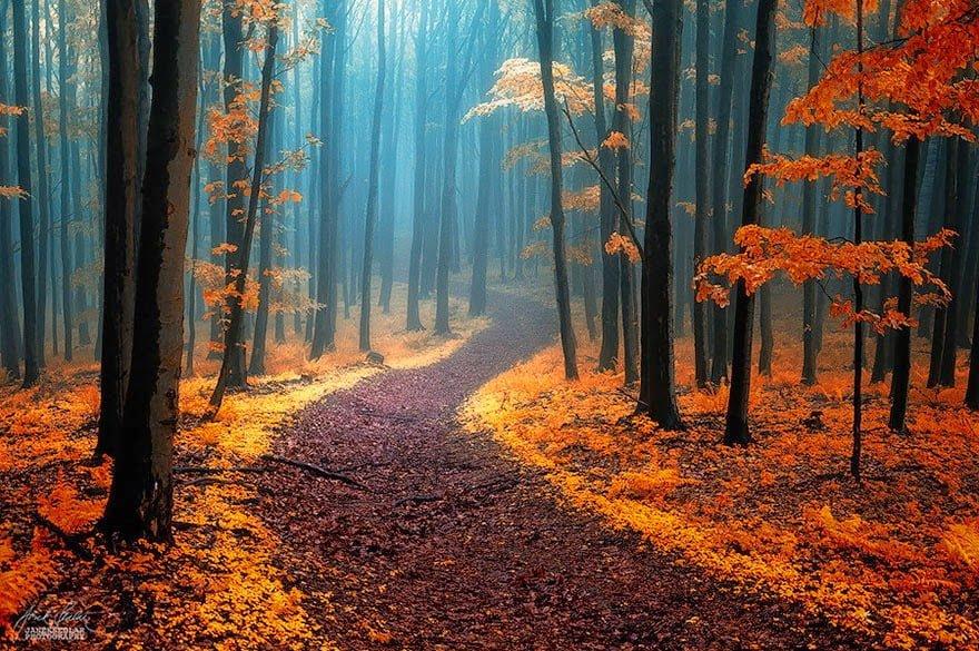 Hindi, Information, History, Janakri World, Top 20,10, Beautiful, Magical, Extraordinary, Path, Raste, Way, Photo, Images, Wallpaper, Nature Wallpaper, Nature Photography,