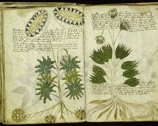 Voynich Manuscript Mystery, Story, history in Hindi