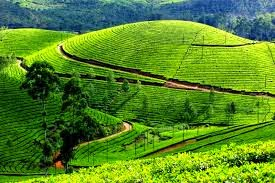 Munnar Kerala, Hindi Information,