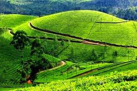 Munnar Kerala, Hindi Information,