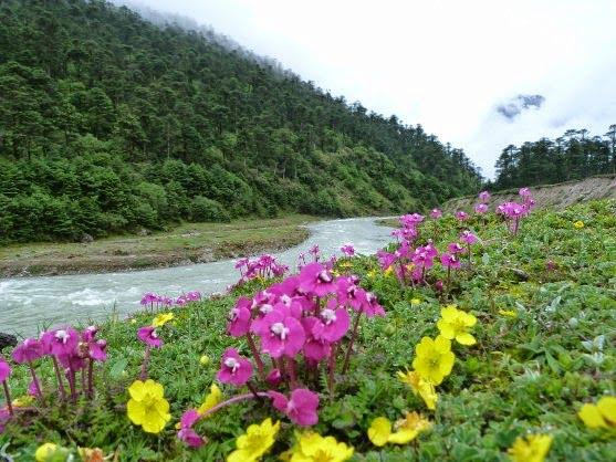 Yumthang Valley, Sikkim, Hindi, Information, History, Story, Jankari, Kahani, Itihas