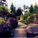 मेघालय का एक गाँव जिसे कहते है भगवान का अपना बगीचा, है एशिया का सबसे स्वच्छ गाँव
