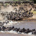 पशु-पक्षीयों के पांच बड़े प्रवास (माइग्रेशन) – जब लाखों पशु-पक्षी एक साथ लाखों मील लम्बा सफर तय करते है