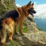 दुनिया में कुत्तों की 10 सबसे खतरनाक नस्ले  (World'S 10 Most Dangerous Dog Breeds