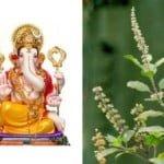 Ganesh Tulsi Story: भगवान गणेश को क्यों नहीं चढ़ाते तुलसी ?