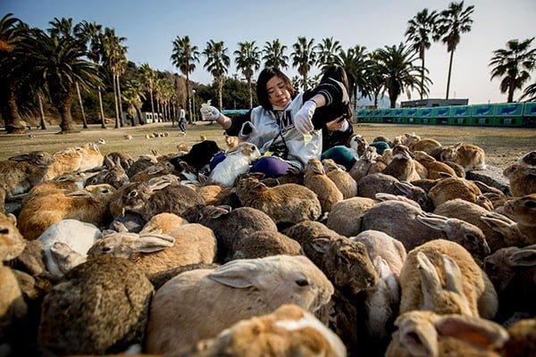 Rabbit Island -Japan History, Story & Information in Hindi