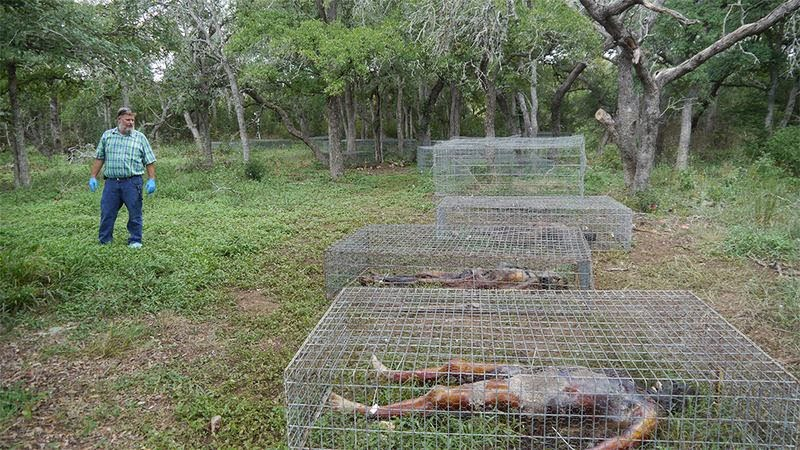 Freeman Ranch Dead Body Farm Story & History in Hindi