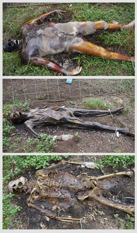 Freeman Ranch Dead Body Texas Farm Information in Hindi