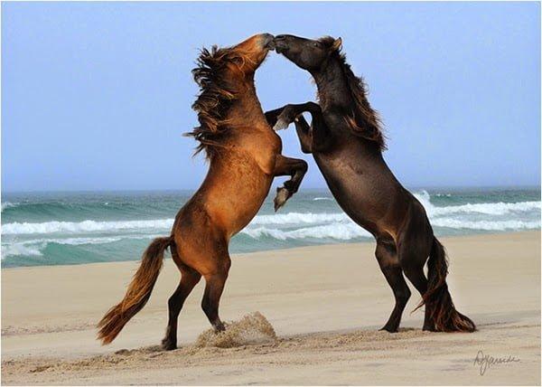 Island of Shipwrecks and Wild horses History, Story & Information in Hindi