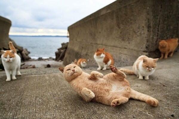Cat Island History, Story & Information in Hindi