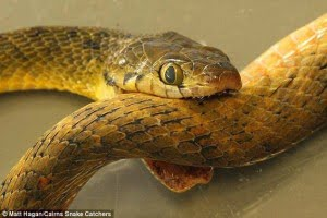 Real Snake Suicide story in Hindi, Kahani, History, Information, Jankari, Itihas,
