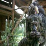 2014 में खोजी गई जीव-जंतुओं की  20 नई प्रजातियां