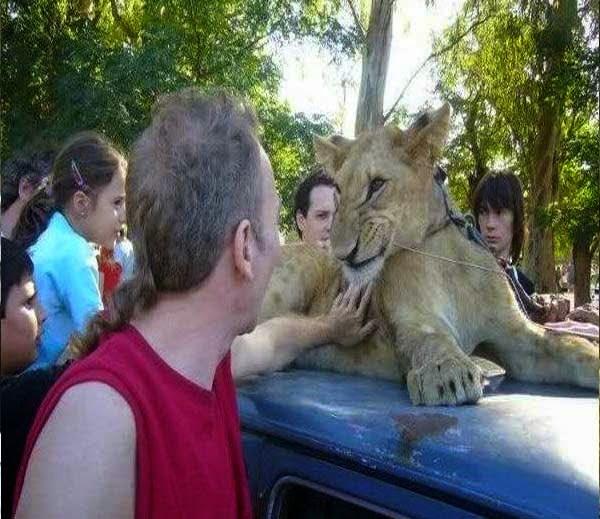 Lujan Zoo ki kahani