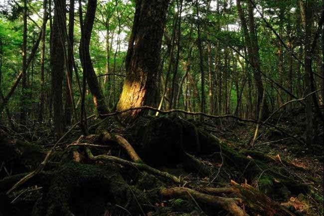 Aokigahara, Japan History & Story in Hindi