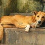 शकुन शास्त्र – जानिए कुत्तों से जुड़े शकुन-अपशकुन