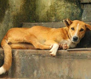 Shakun Shastra - Shakun Apshakun for dog in Hindi