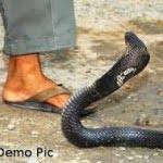 Real snake stories : जब सांप के काटने से मरे इंसान फिर से हुए ज़िंदा !