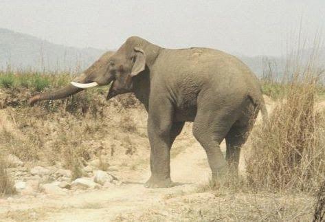 10 Most Dangerous Animals Of India Hindi Information - Elephant