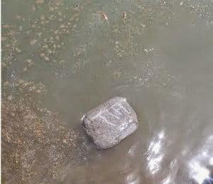Floating stone (Ramshila) find in Hasdeo river at Chhattisgarh : Hindi News