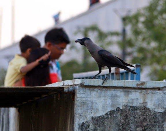Hindi Real Crow Story
