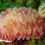 इस जीव के पास है डिसपोजेबल पेनिस- अपने जीवन में कई बार उगाता है नया लिंग