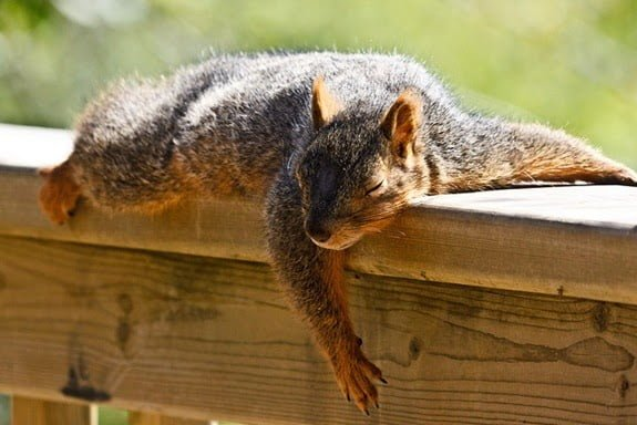 sleepingsquirrel