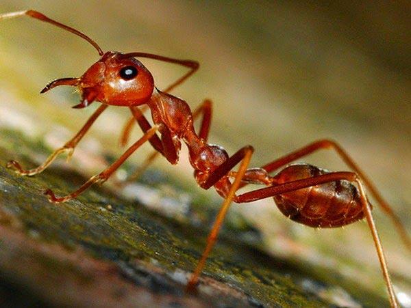 How Ant Predict Earthquakes (Bhukamp) in Hindi