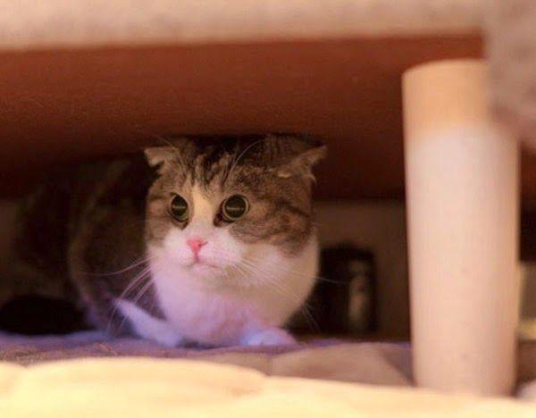 How Cat Predict Earthquakes (Bhukamp) in Hindi