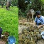 ब्लैक आइवरी ब्लैंड कॉफी- हाथी के गोबर से बनती है ये कॉफी, 67 हजार रुपए प्रति किलो है कीमत